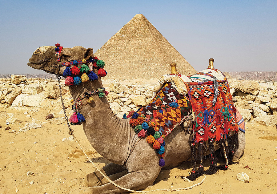 Egyptian-camel-by-Dennis-Bunnik
