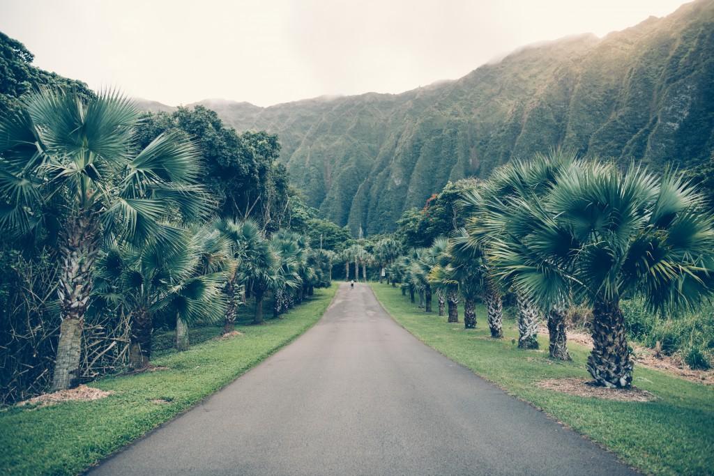 Road in Hoomaluhia Botanical Garden