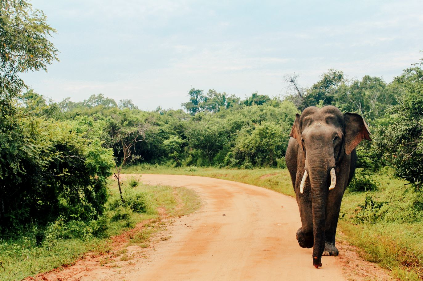 WATCH: Elephant wanders through Sri Lankan hotel