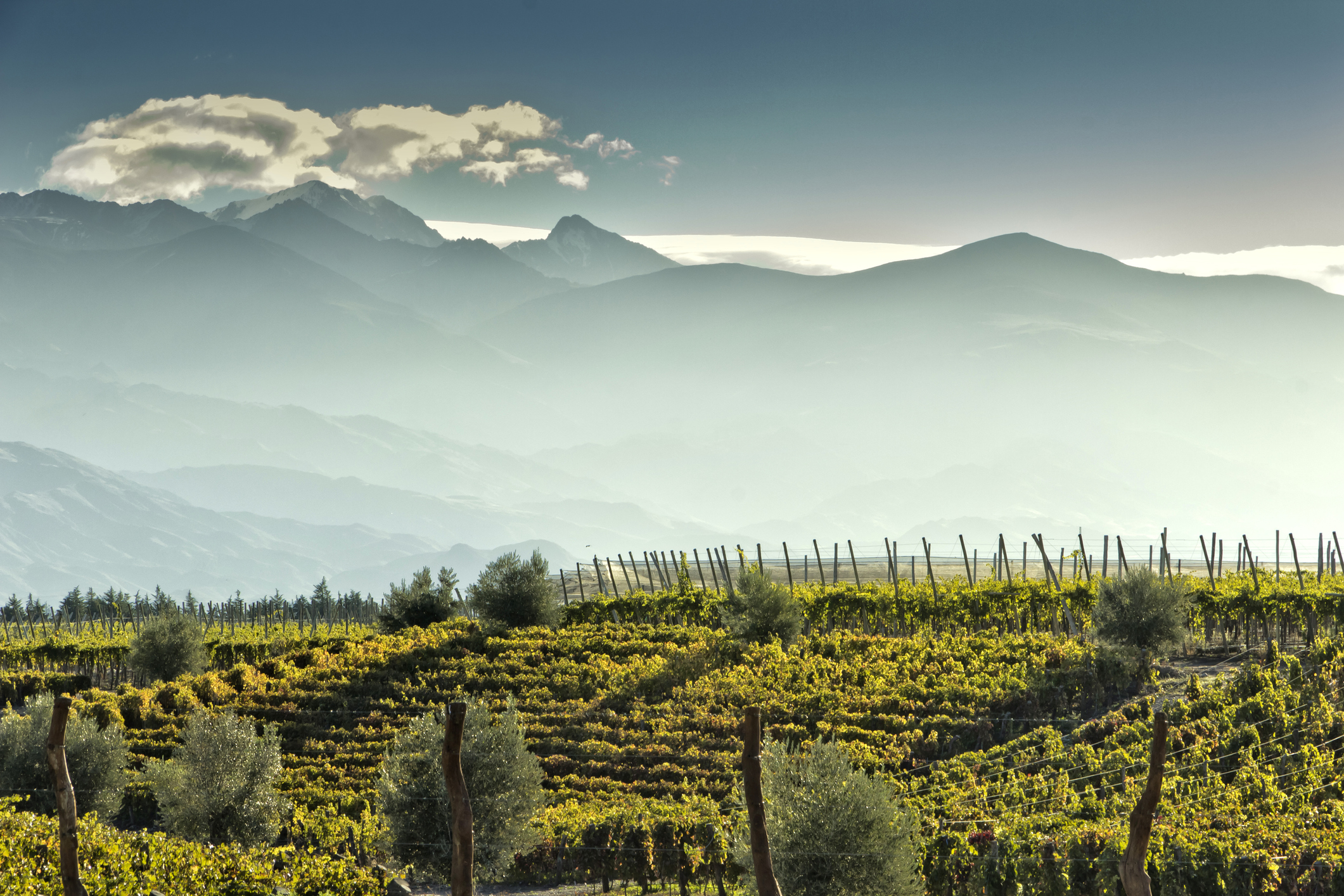 World's best vineyards revealed … but only three are Australian