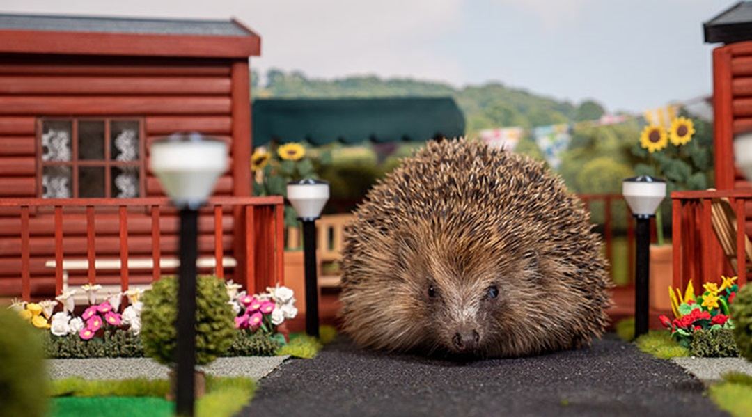 World's first hedgehog holiday park opens in the UK – Travel Weekly